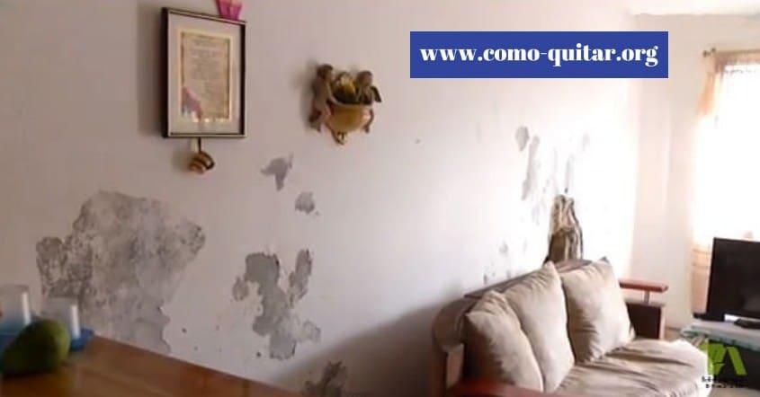 Como quitar la humedad de las paredes en el interior de una vivienda 2019 - Como quitar las manchas de humedad de las paredes ...